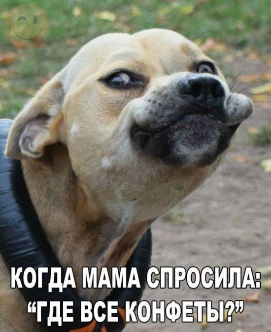 Смешные картинки про котов и собак