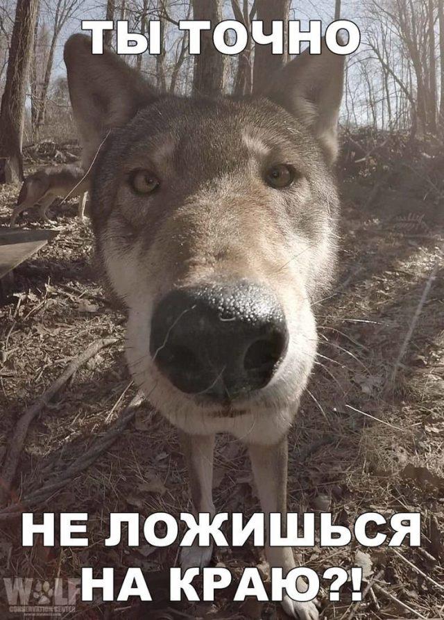 Смешные картинки про собак