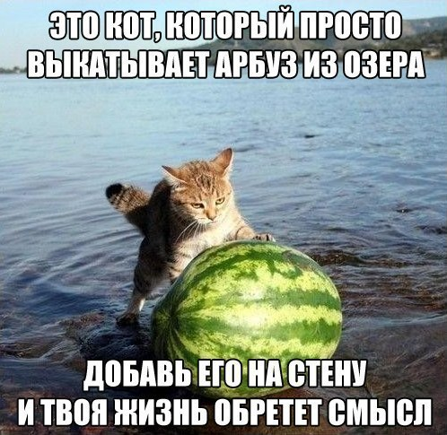 Этот кот просто вытаскивает арбуз из озера