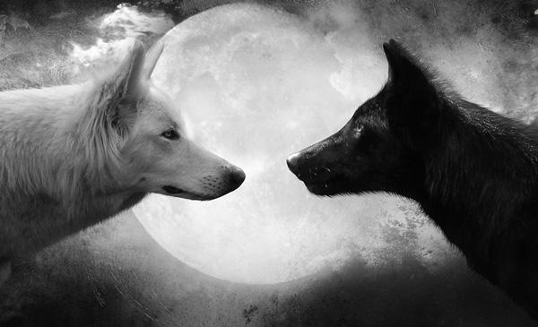 Короткая притча про добро и зло - Два волка