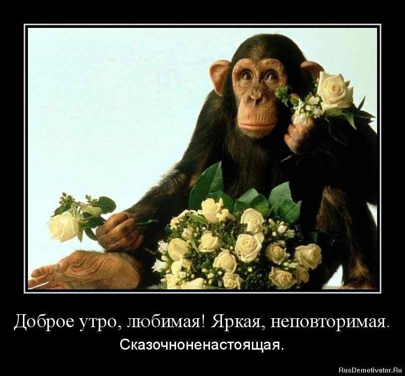 Прикольные картинки с обезьянами с добрым утром с надписью, рождением дочери послать