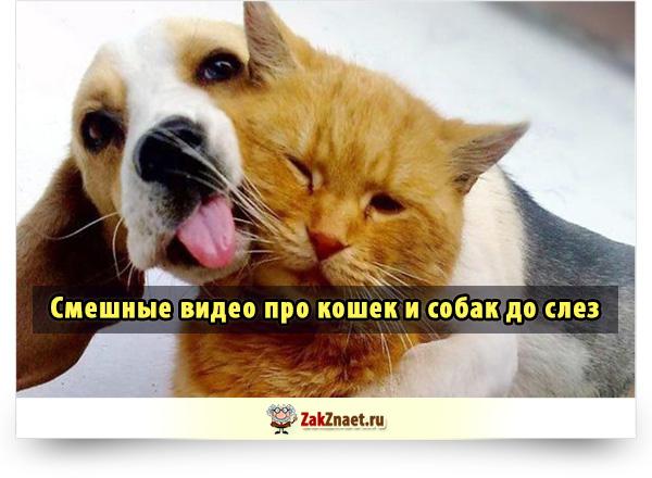 Смешные видео про кошек и собак до слез