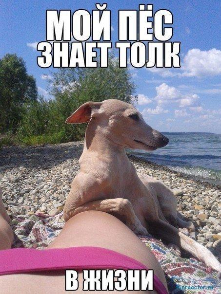 Мой пес знает толк в жизни